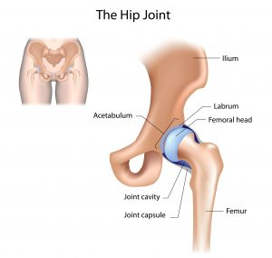 The labrum is in the shoulder and hip joints